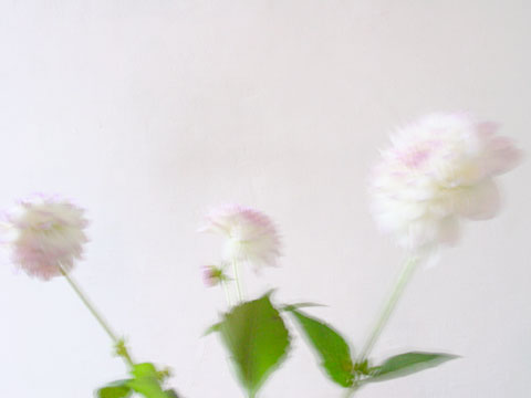 White Flowers 01