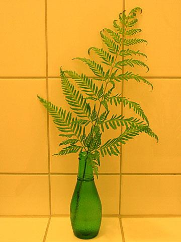 Fern in vase