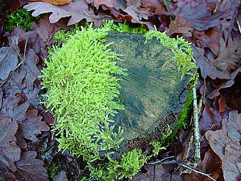 Moss and foliage