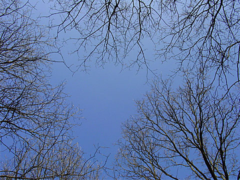 Sky with boughs