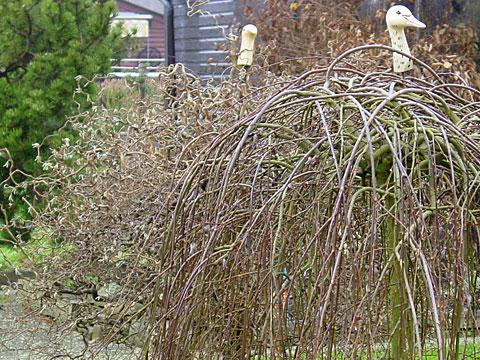 Goose heads