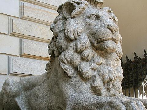 Watching Lion 02