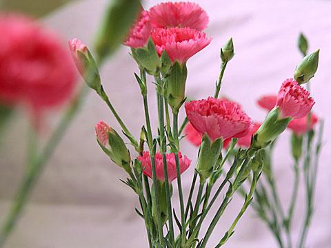 Pinky Pink 02