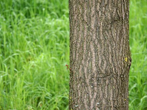 Tree Trunk 01