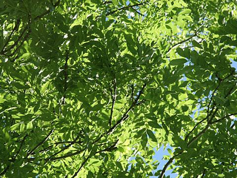 Green Leaves 02