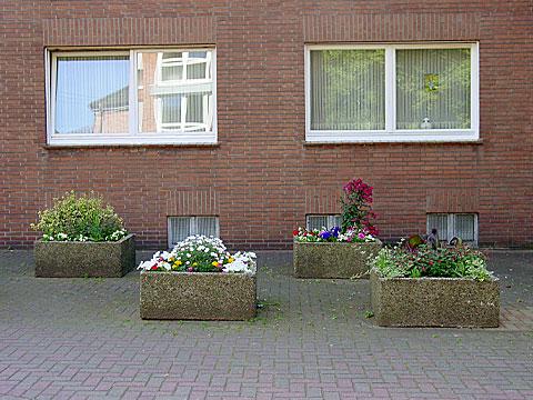 Flower Tub Arrangement
