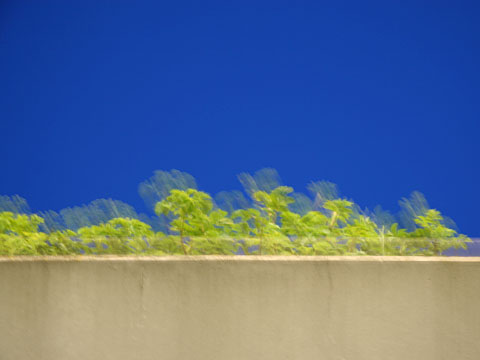 Plants in front of blue Sky