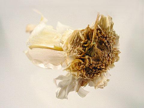 Flying Garlic