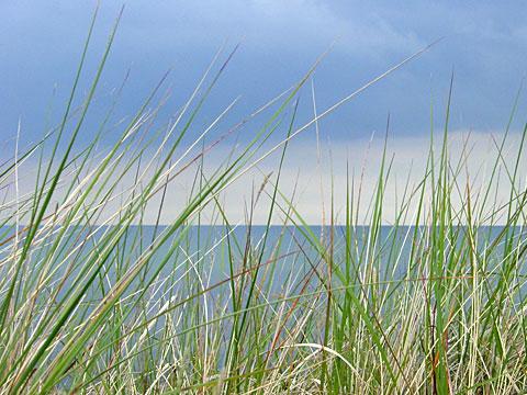 Beach Grass II