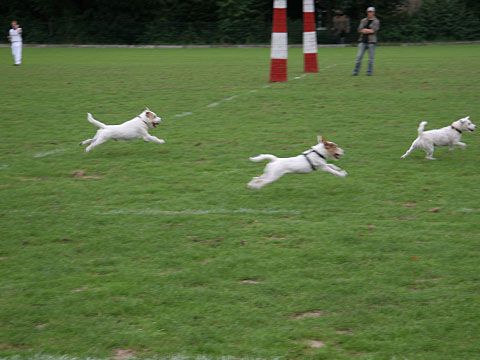 Flying Terriers