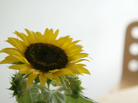 Sunflower and Chair