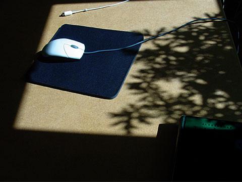 Shadow Leaves II
