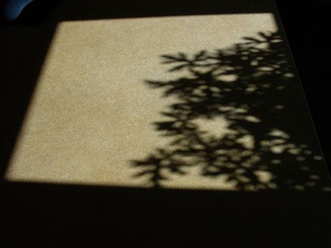Shadow Leaves I