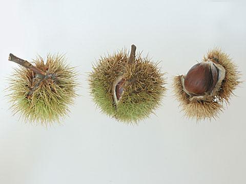 Chestnuts I