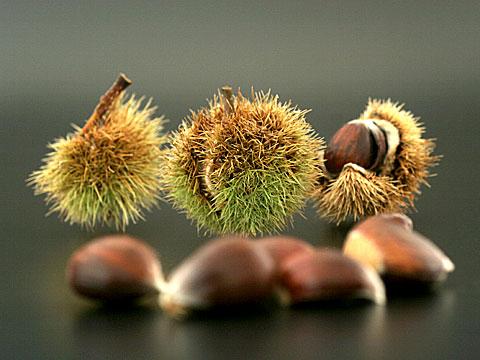 Chestnuts III