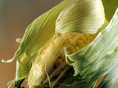 Maize II