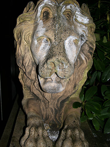 Watching Lion 06