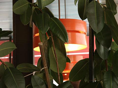 Green Leaves in orange Environment