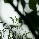 leaves focus