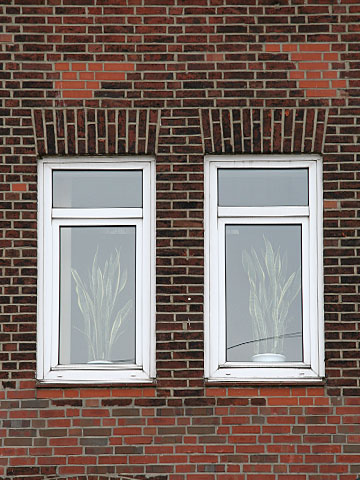 Office Windows with plants