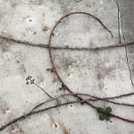 cirrus on concrete