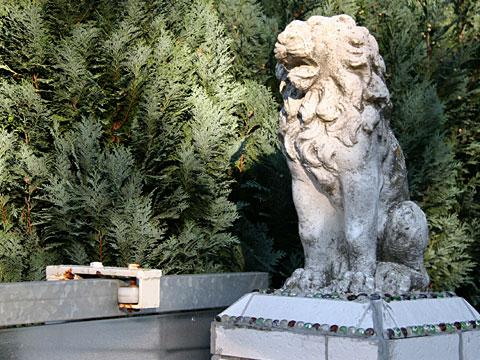 Watching Lion 09