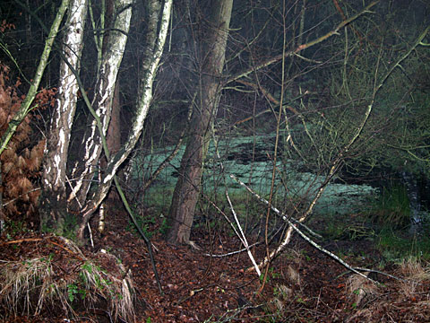 Moor Landscape 02