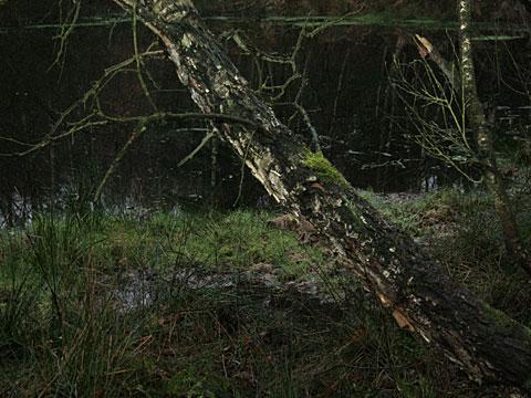 Moor Landscape 04