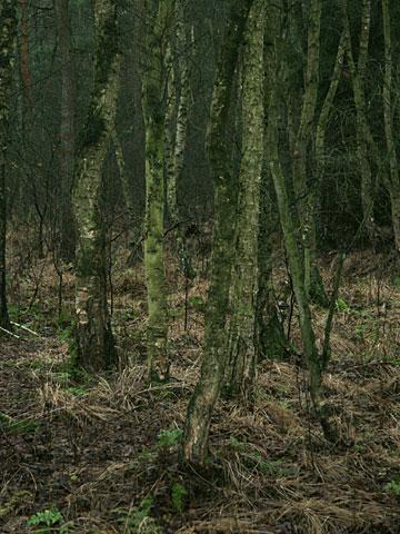 Moor Landscape 05