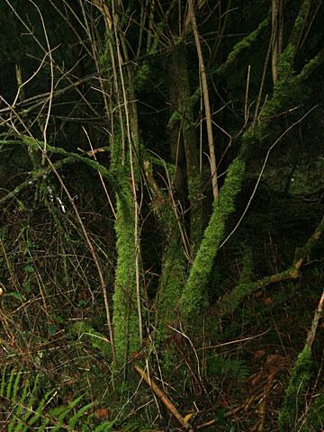 Moor Landscape 09