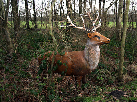 Dummy Deer