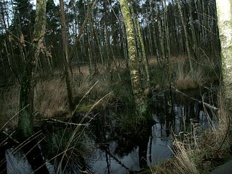 Moor Landscape 11