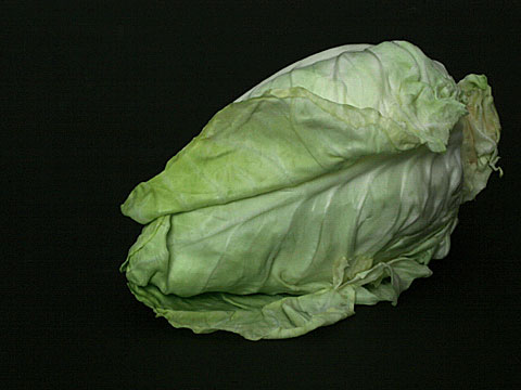 Pointed cabbage 02