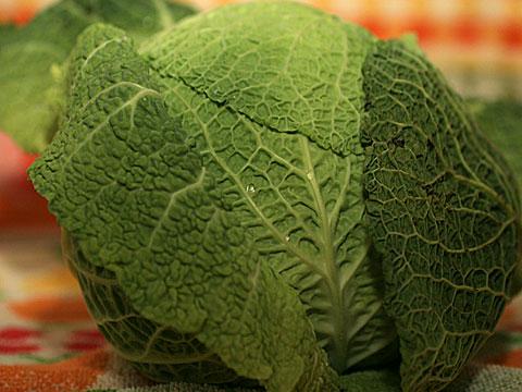Savoy Cabbage 04