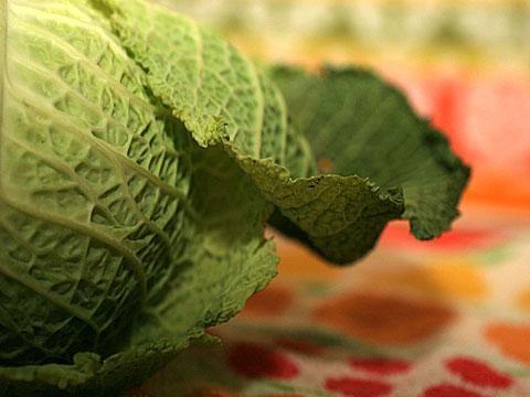 Savoy Cabbage 03