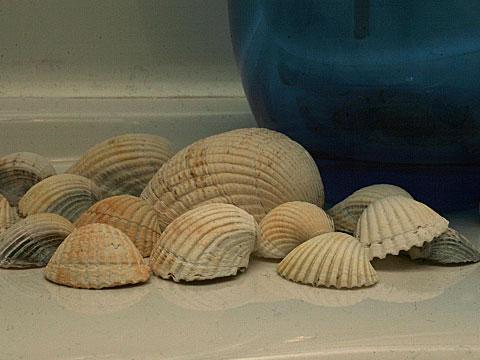 Seashells 03