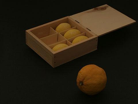 Lemon Group 02