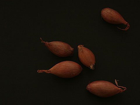 Onions 05
