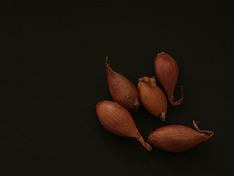 Onions 06
