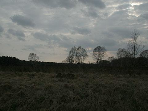 Moor Landscape 14