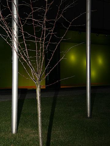 Tree at Night 01