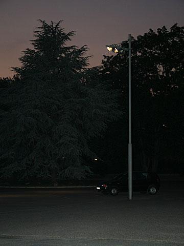 Fir at Night 01