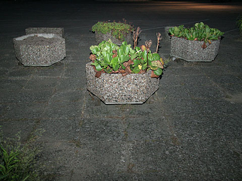 Flower Boxes at Night 01
