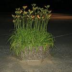 flower box at night