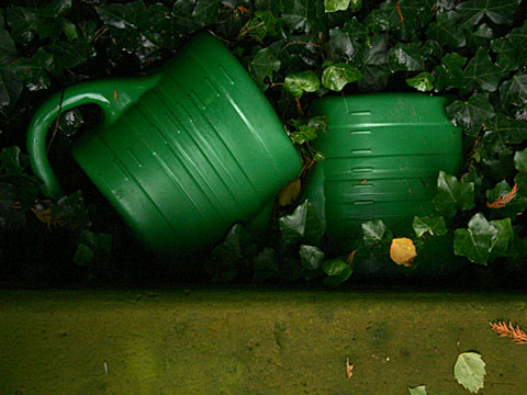 Watering Cans and Ivy 01