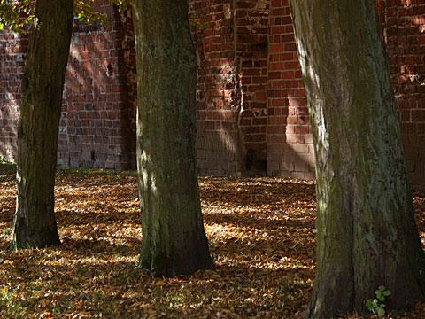 Autumnal Walls