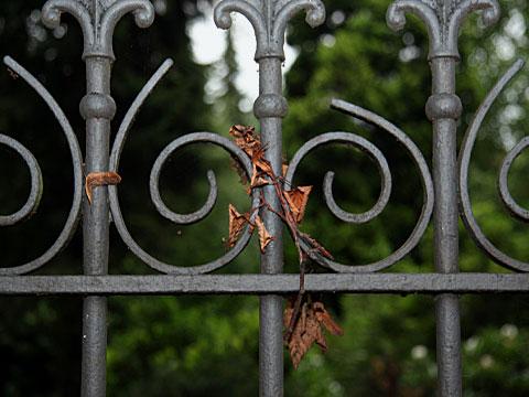 Autumnal Gate