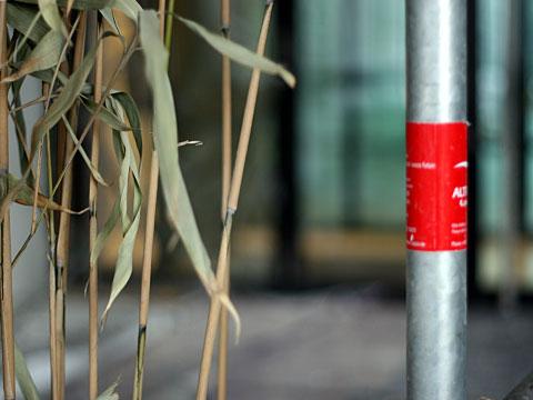 Forgotten Bamboo