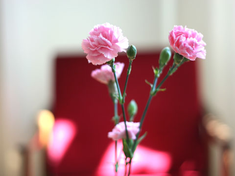 Pink 03