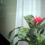 red flower in office